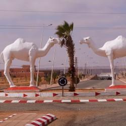 Kamelkreisverkehr