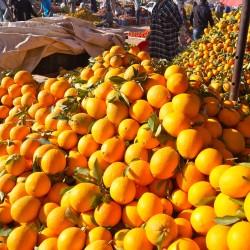 Orangenstand
